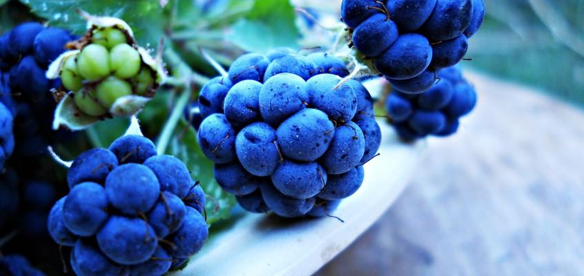 Jakie warzywa i owoce jeść we wrześniu?