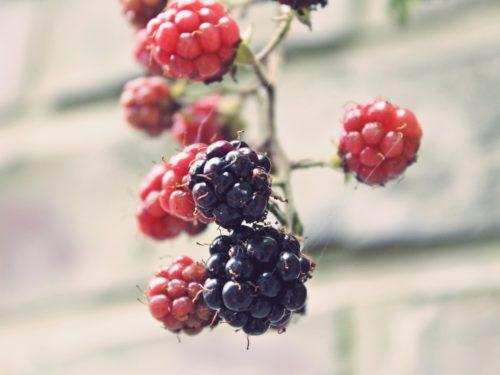 Warzywa i owoce sezonowe w sierpniu i wrześniu